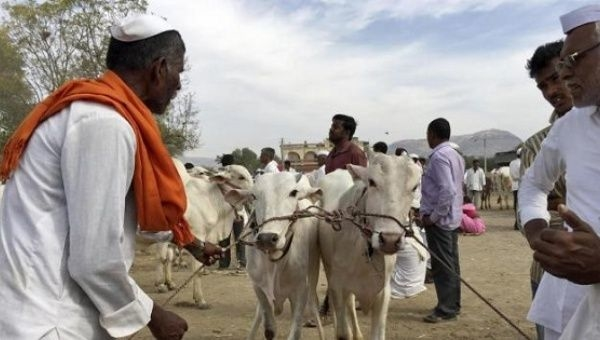 Cattle Sale Ban: Another Burden on Farmers
