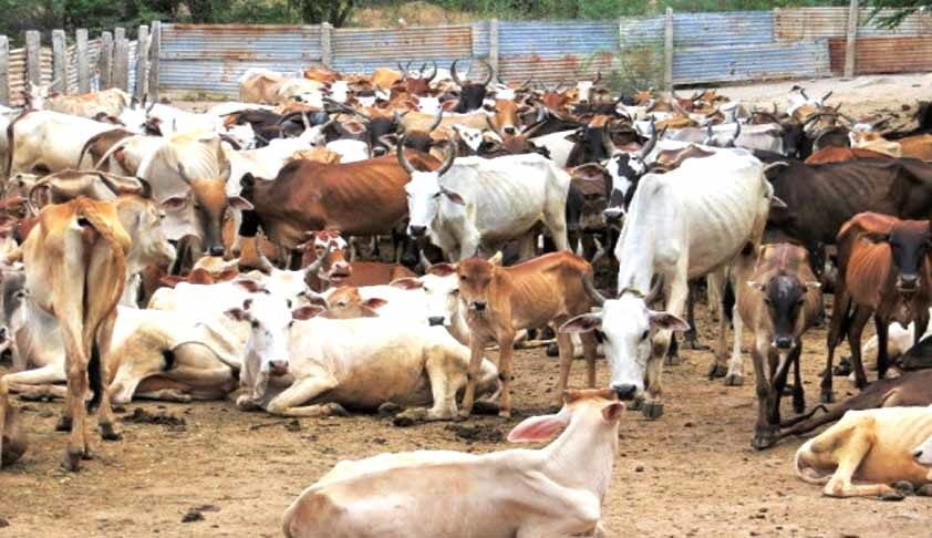 Central Government Knew Cattle Trade Ban was Illegal: Subhash Chandran