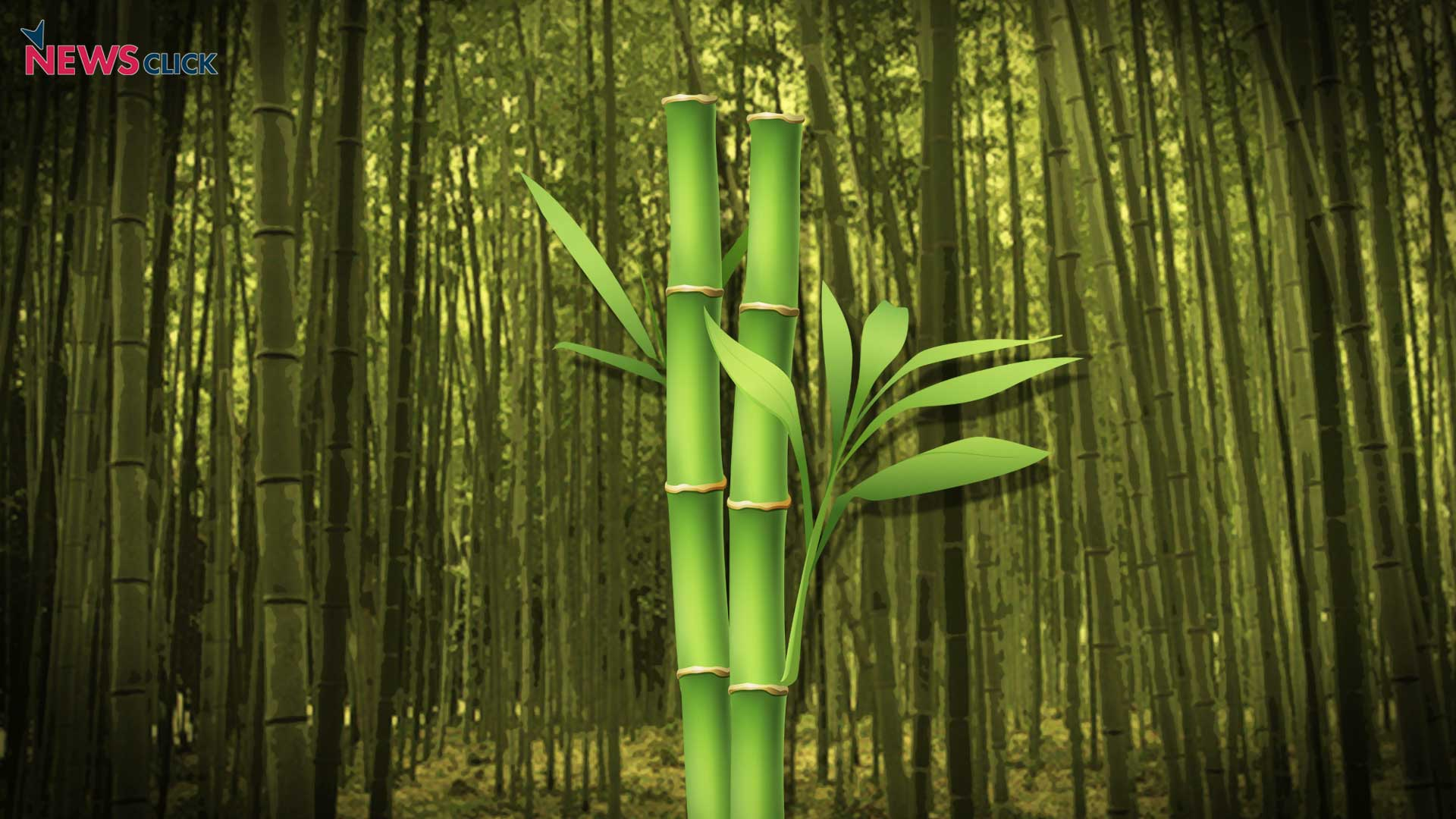 New Law Says Bamboo Growing On Non Forest Lands Is Not Tree