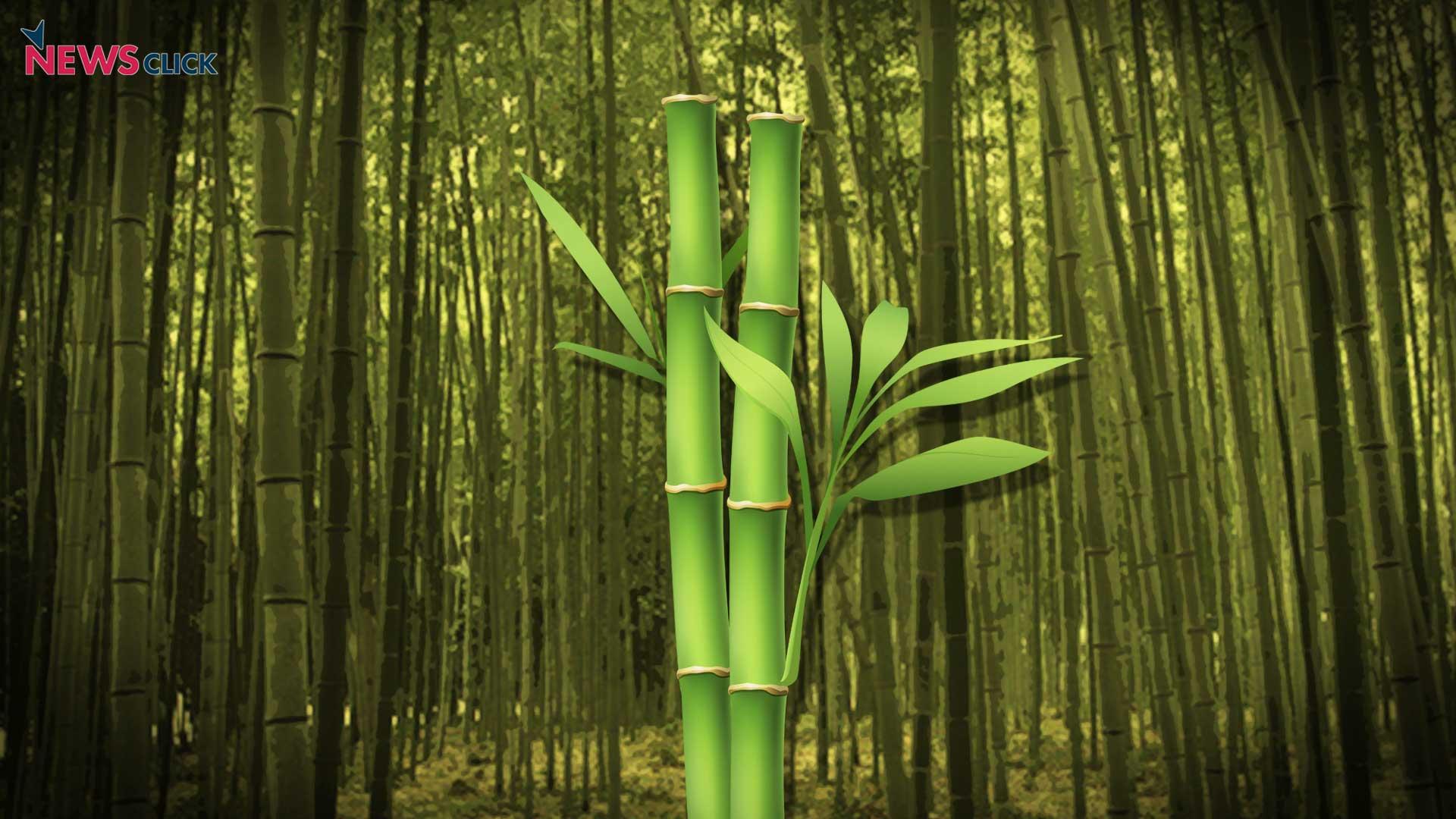 how to help bamboo grow