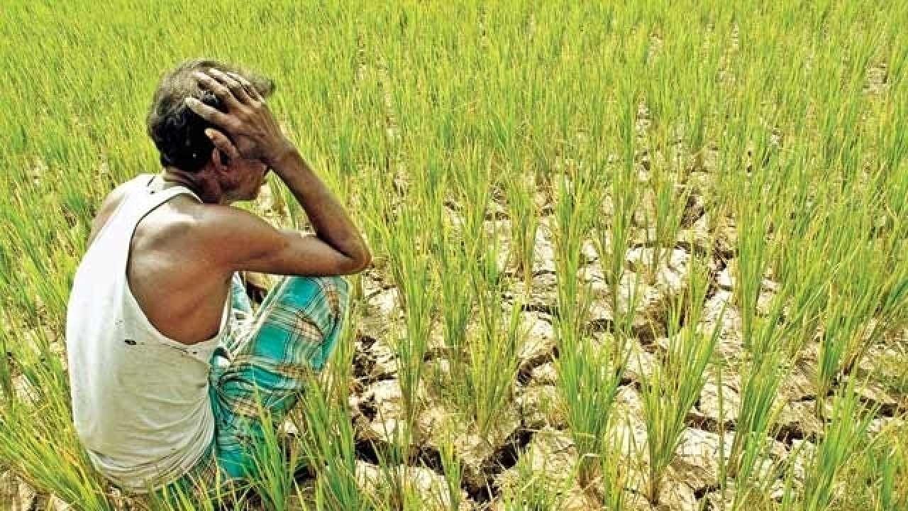 Beneficiile nebănuite ale culturilor MG asupra sănătății