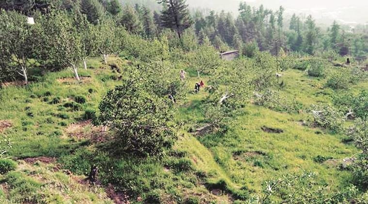 army cuts trees in himachal