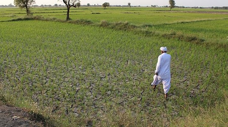 Caste Stranglehold in Agriculture