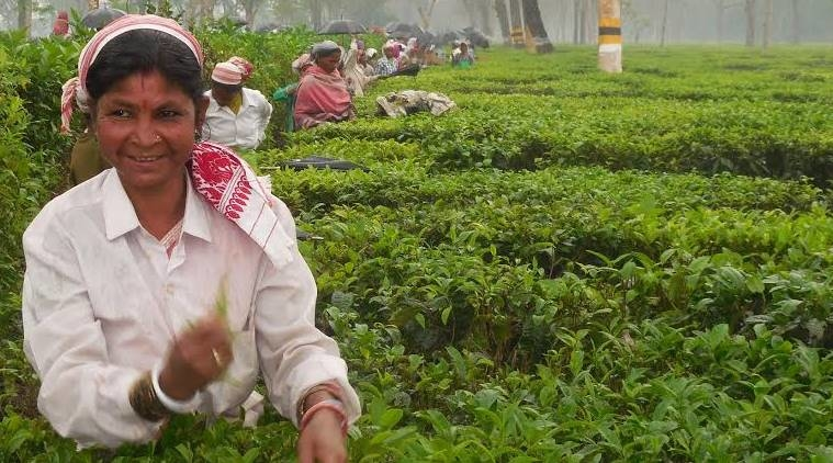 Assam Tea Workers