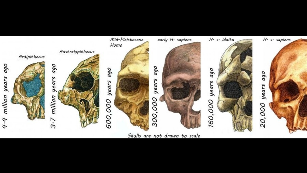 socialisation and modern human face