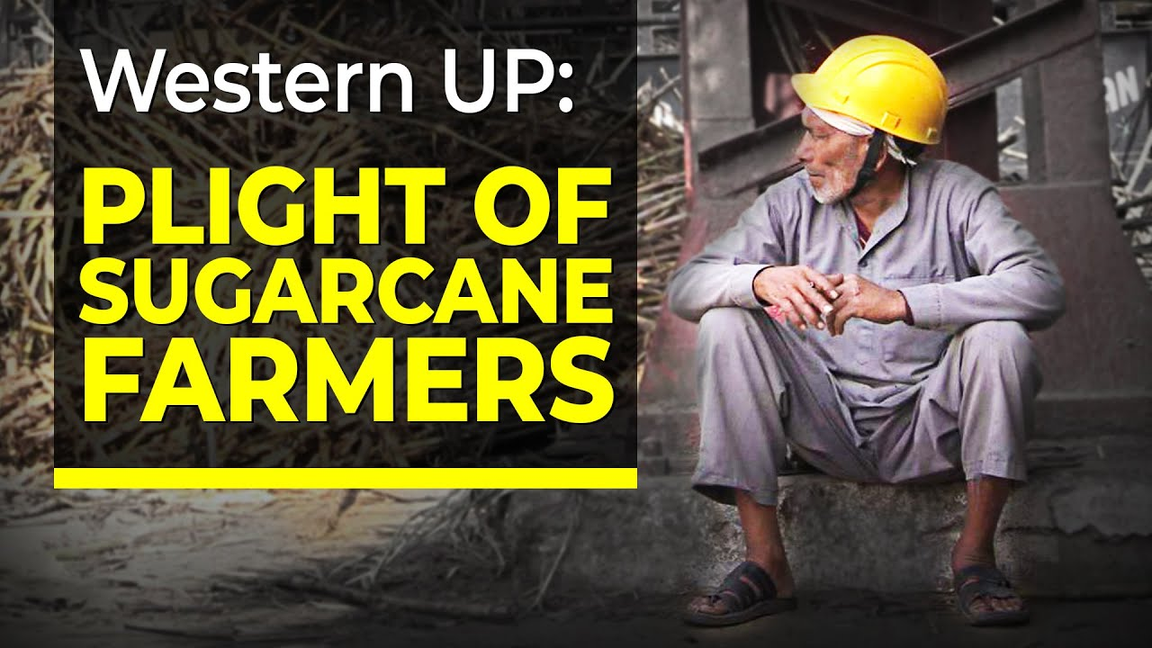 plight of sugarcane farmers