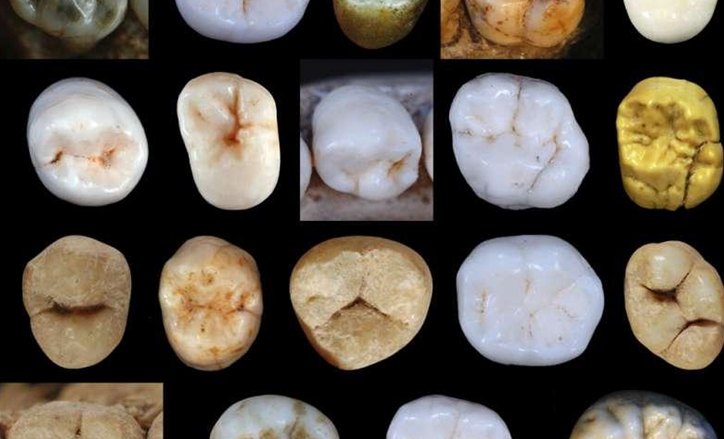 When did Modern Humans and Neanderthals Diverge?