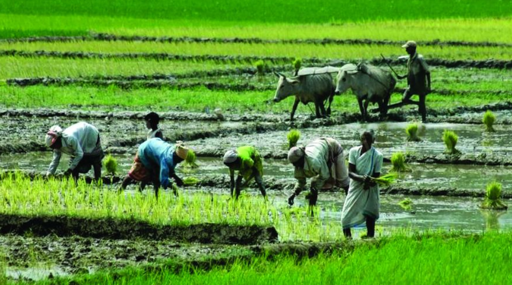 How Land Reforms by the Left Empowered