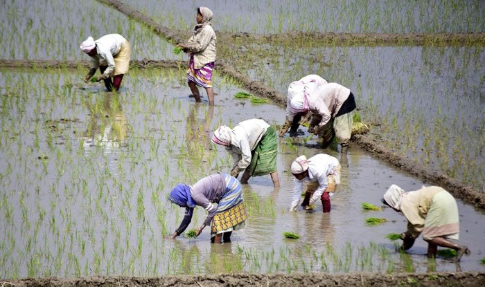 Is Loan Waiver Scheme the Solution for Karnataka Farmers' Plight?