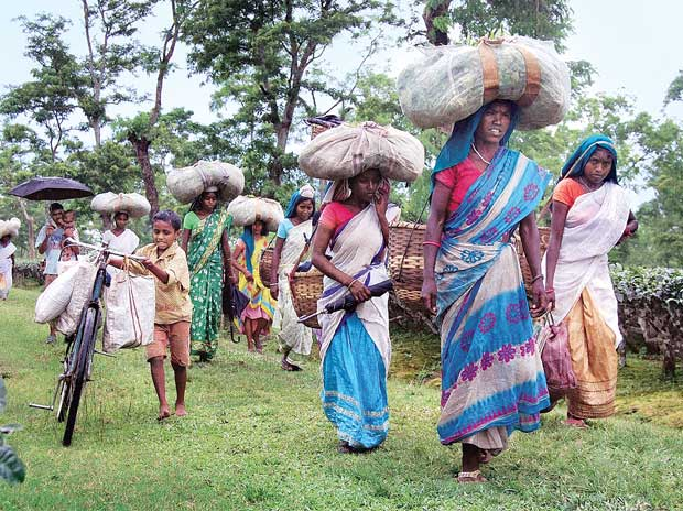 Telangana High Court: State Govt. Should Provide Proper Rehabilitation Facilities to Evicted Adivasi Families from Reserve Forest Area