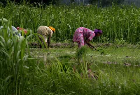 Amid Deep Agrarian Crisis, Marginal Increase in MSP of Kharif Crops by Govt