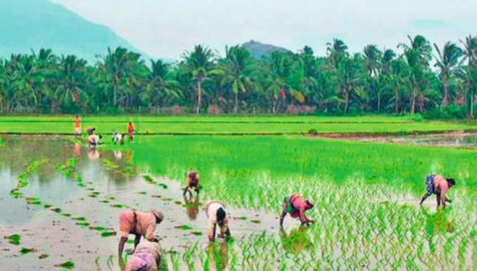 Kerala to Follow Collective Farming