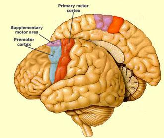 Brain Remember Motor Sequence