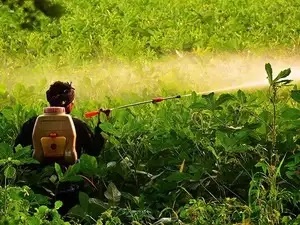 Synthetic pesticides causing cancer in himachal pradesh