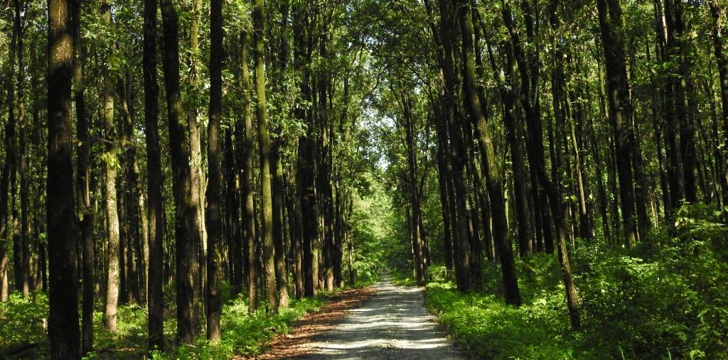 National Forest Policy Cleared by Ministries, Not Made Public