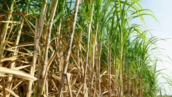 anti-India complaints in WTO regarding sugar subsidy