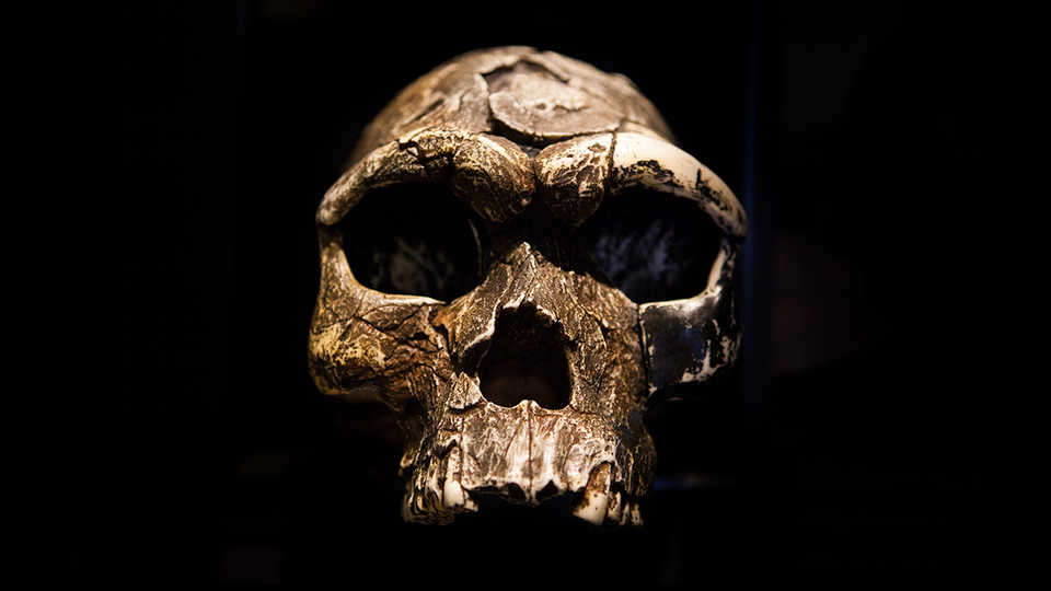 Ghost Population' of Archaic Humans Found in Modern Day Genes of People in West Africa