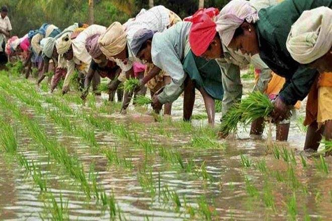 Over 5 Crore Farmers Yet to Get 3rd Instalment of PM-Kisan Scheme