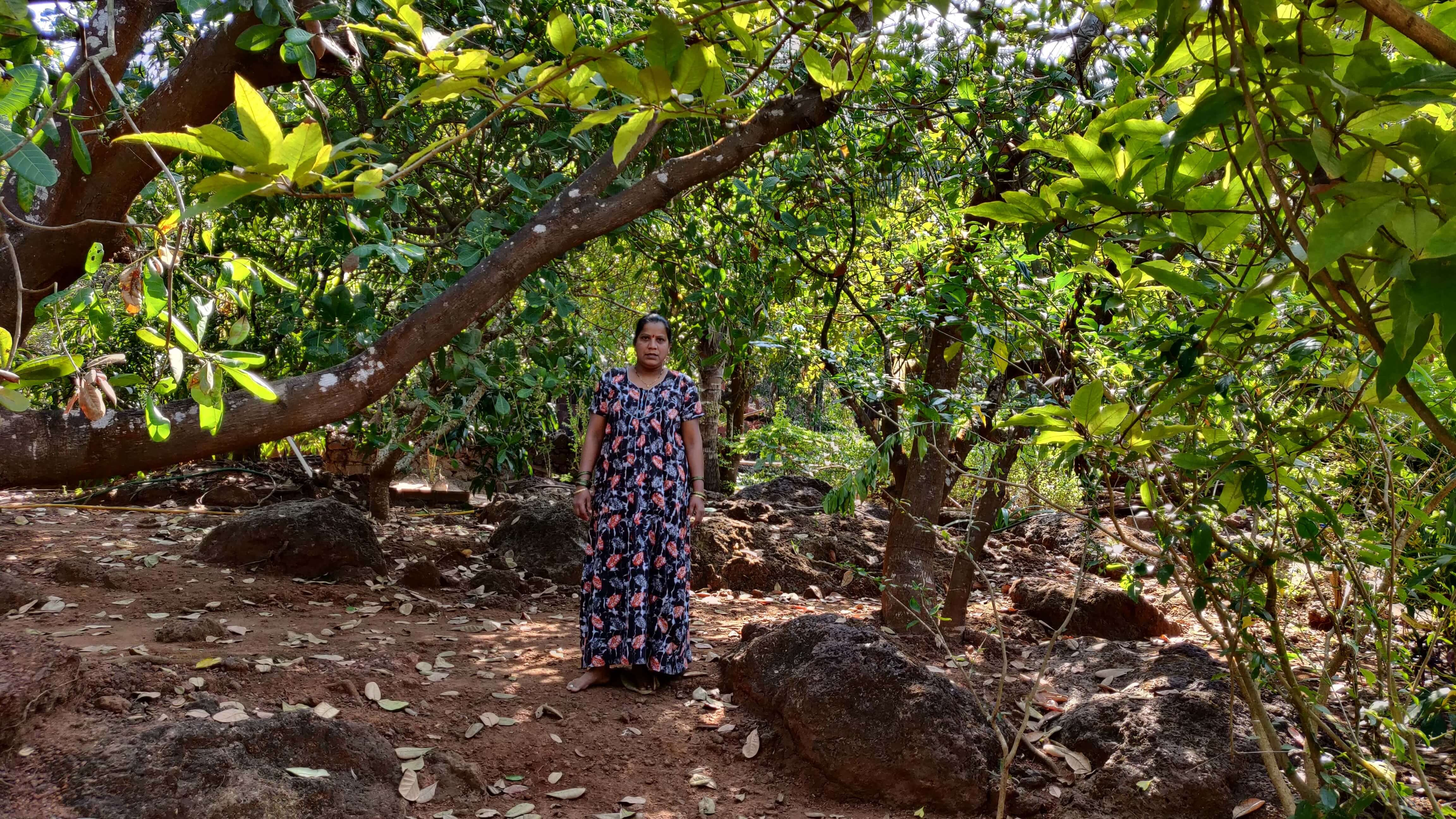 Climate Change Affecting Cashew
