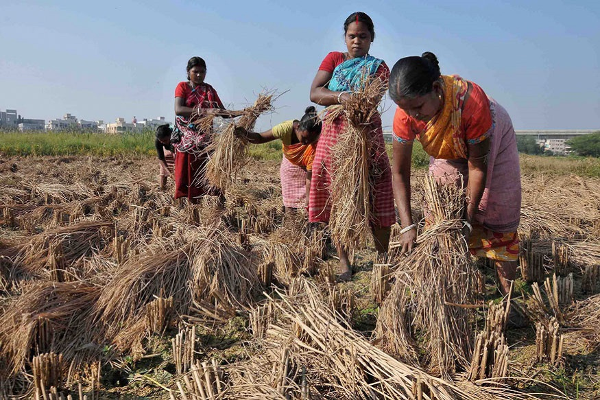 Women Are Single Largest Exclusion in India's Farmer Suicides Data: Sainath