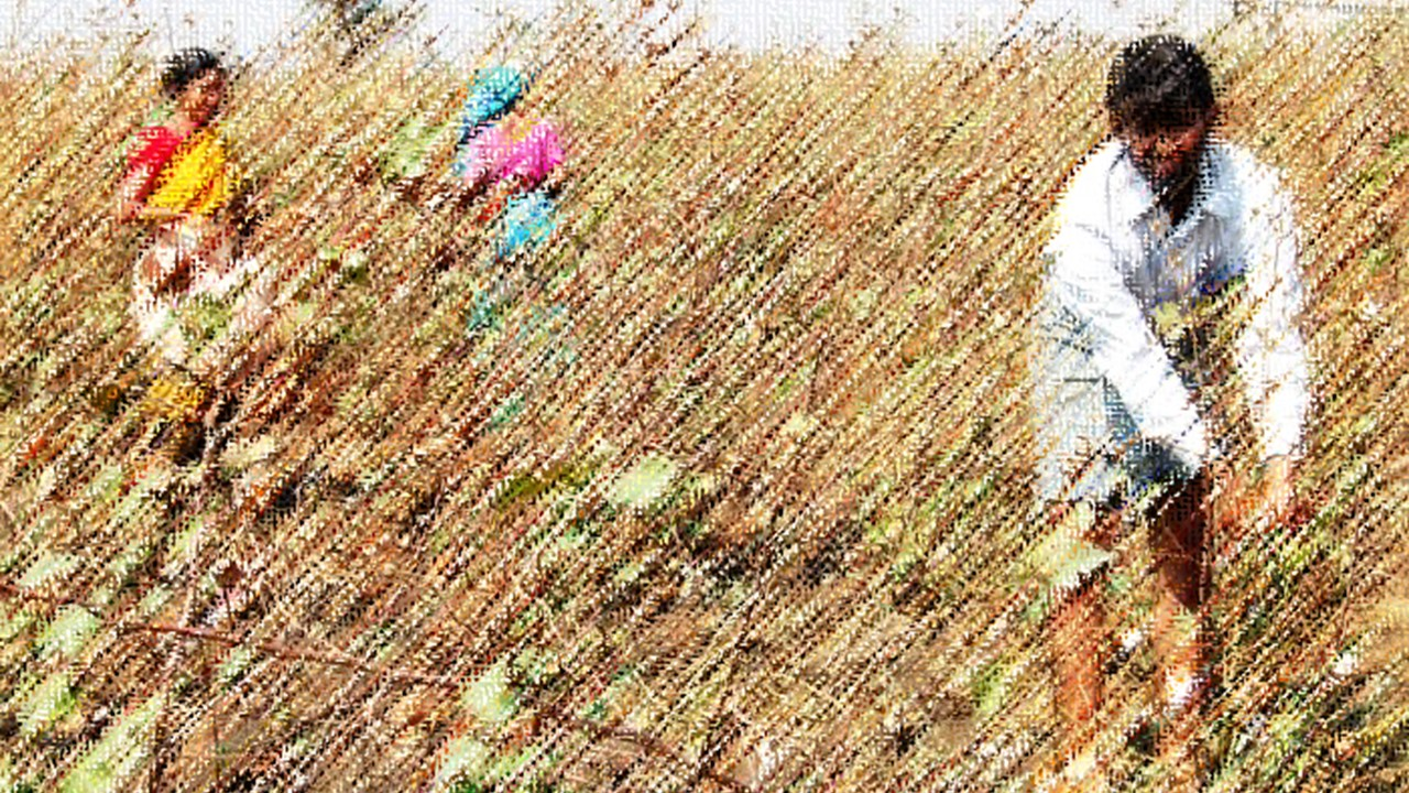 Unable to Harvest, Latur Farmers Forced to Let Standing Crop Rot
