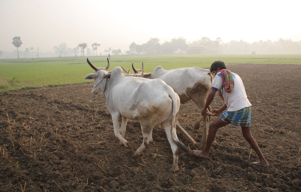 Unable to Sell Harvested Crops, Bengal Farmers Stare at Indebtedness