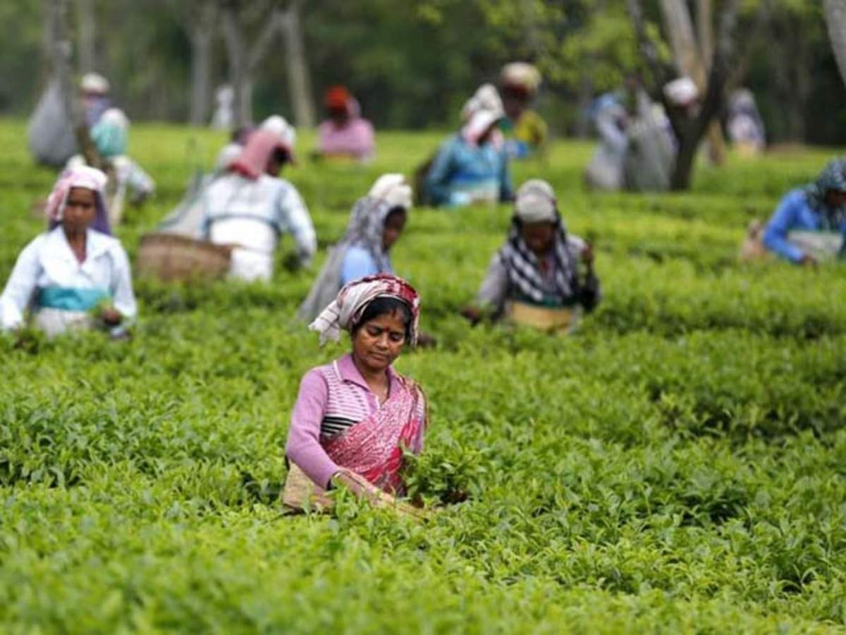 COVID-19: TN Tea Plantation Workers Forced to Work Without Preventive Measures and Reliefs