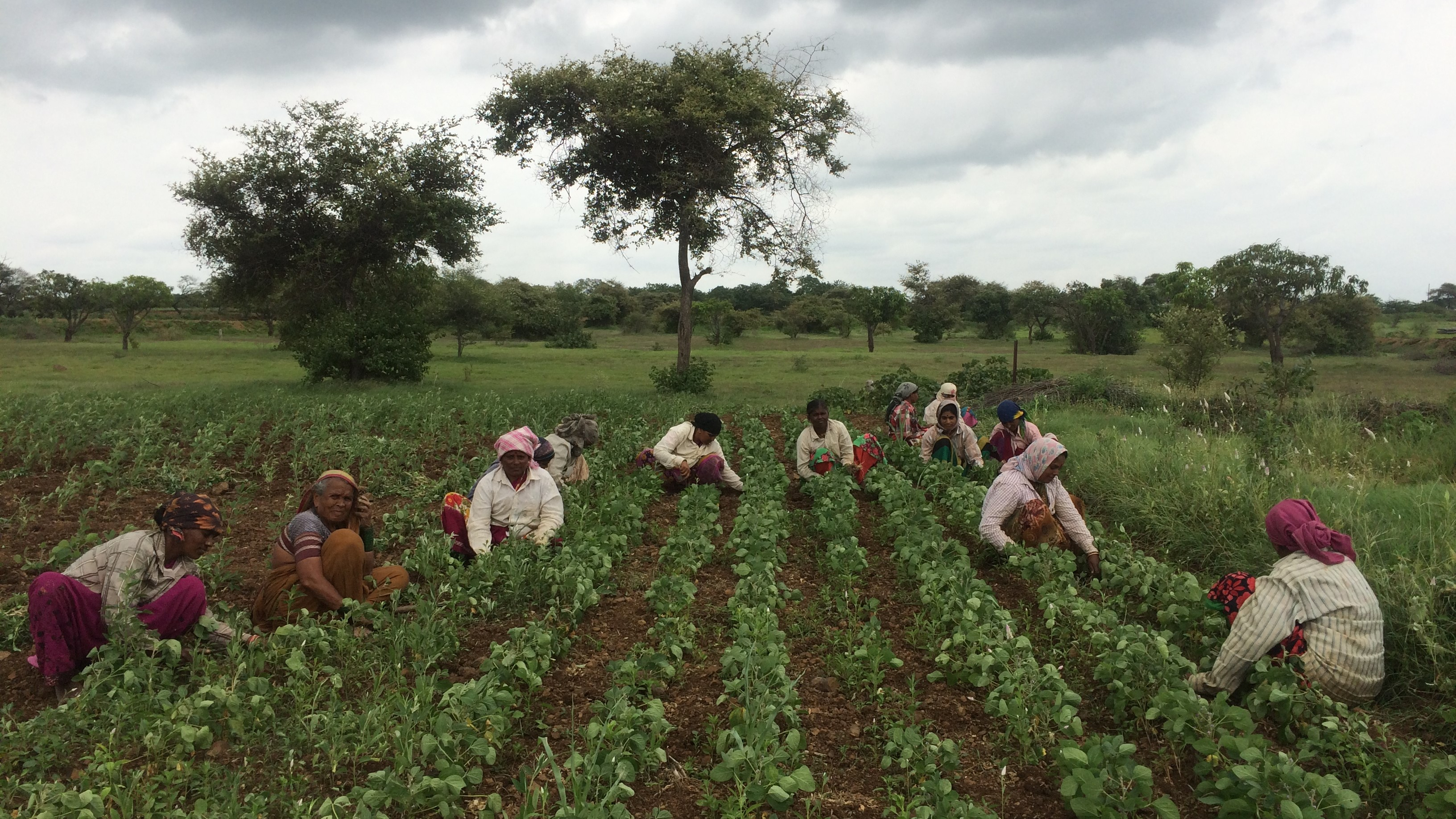 Struggle to Avail Crop Loans