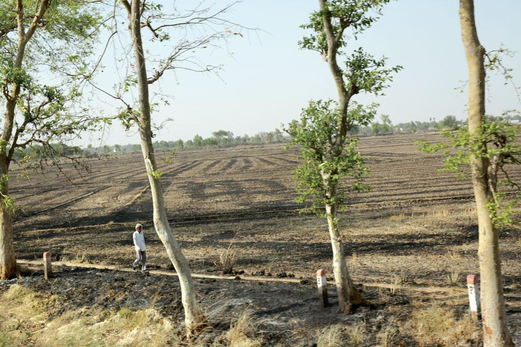 Climate Change: Bhopal Loses 5 Lakh Trees in the Last Decade, Forest Cover Down by 26%, Reveals Report