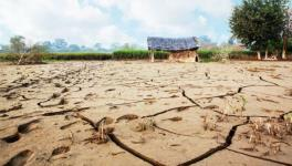 Close to 4,000 Madhya Pradesh Villages Stare at Acute Drought