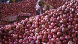 Elections 2019: Tears of Onion Farmers to Affect BJP Bastion in North Maharashtra