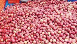 Himachal HC Issues Strict Order in Case of Middlemen Fleecing Apple Farmers