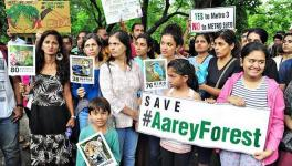 Bombay HC Declines Forest Tag for Aarey, Refuses to Stop Felling of 2,600 Trees