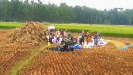 COVID-19 in Rural India-XXXVI: Farmers Forced to Sell Paddy Below MSP in Bengal's East Medinipur