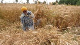 Will Decriminalisation of Section 56(1) of NABARD Act help business grow or create hurdles?