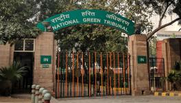 NGT Seeks Ban on Mining Minor Minerals After Killing of Forest Guard in Sariska