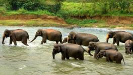 World Elephant Day: Unsafe Future of Odisha's Elephants