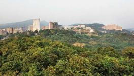 'Aarey' to be Declared a Forest but No Clarity on Remaining Land