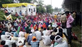 MP Forest Adivasi