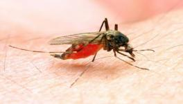 India Recorded Largest Reduction in Malaria Cases in South-East Asia in 2000-2019: WHO