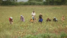 Indian Farmers go landless