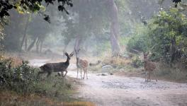 Uttarakhand Wildlife Reserves