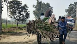 Farmer taking his harvest to the local Kiratpur sugar mill. PC Saurabh Sharma