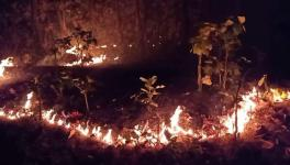 Odisha: Similipal Fires Continue While Govt Claims Situation Under Control