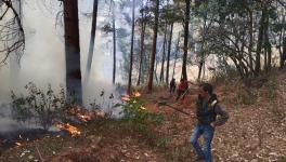 Menace of Forest Fires Continues in Uttarakhand