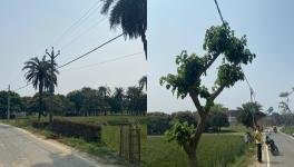 Trees placed under electricity cables roadside