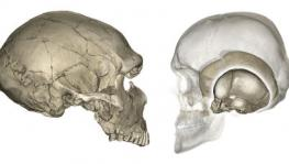 Genetic Variations in Neanderthals