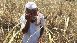 Elections 2019: No 'Acche Din' Yet for UP's Small Farmers