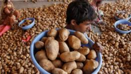 Potato Farmers Seek Govt. Help After PepsiCo Slaps Rs 1 Cr Lawsuit
