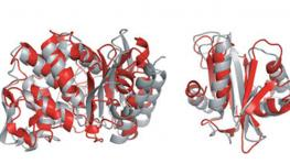 New Method of Protein Structure Elucidation with Mutant Genes